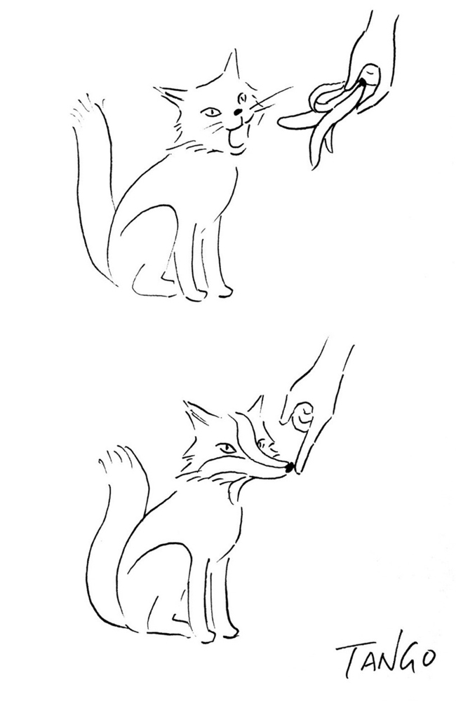 gato-raposa