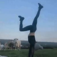Hipnotizando vacas.