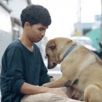Cães de rua recebendo seu primeiro abraço.