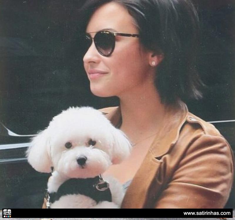 o-cão-de-Demi-Lovato