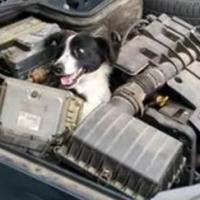 A incrível história do cachorro mecânico.