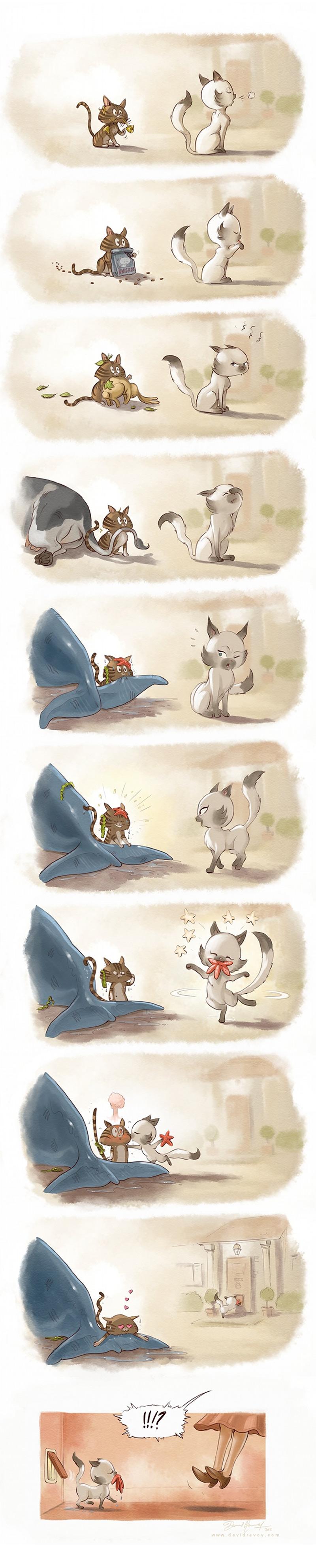 conquistando-uma-gata