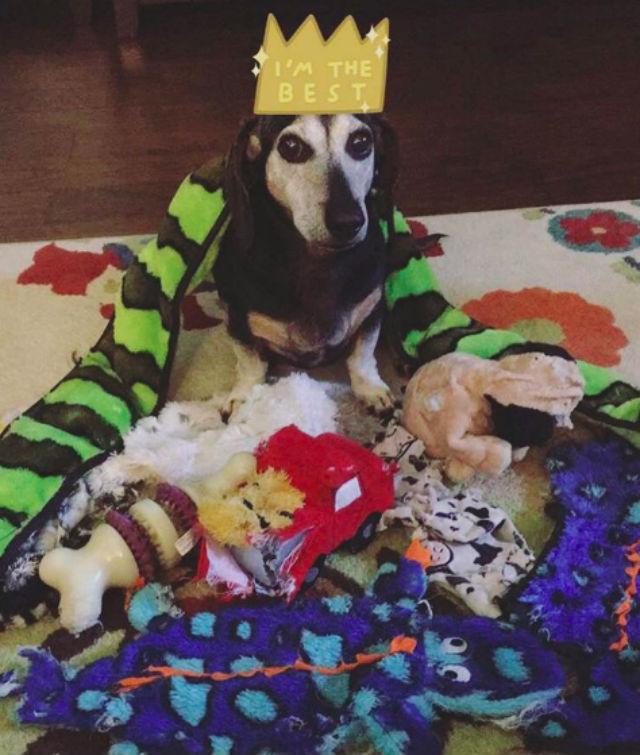 o cão que é o rei da bagunça