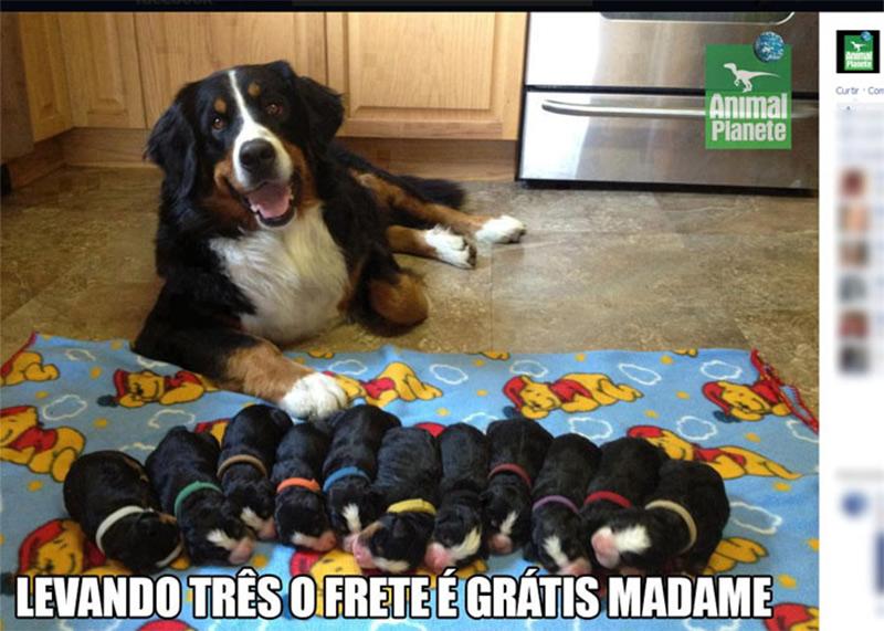 promoção-de-cães