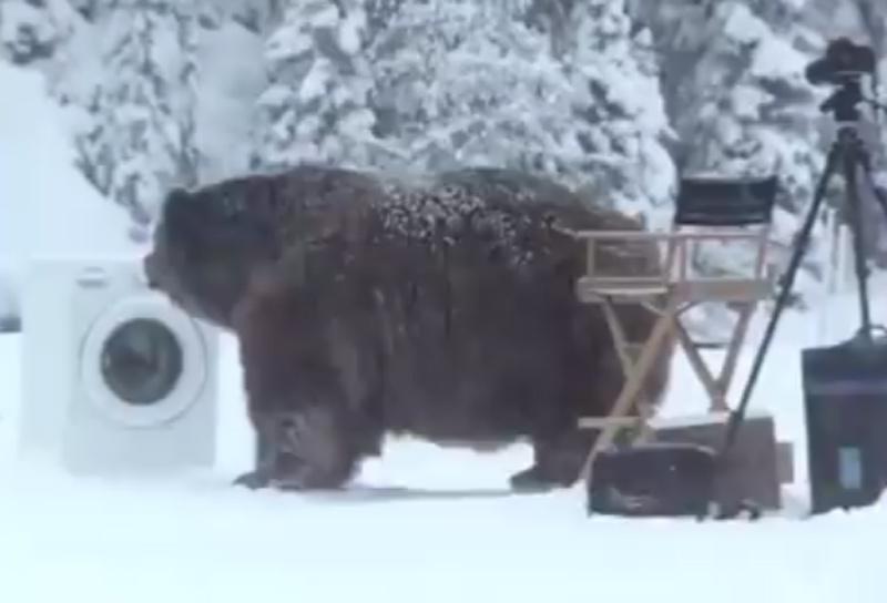 O urso que invadiu as gravações de um comercial para máquina de lavar roupas