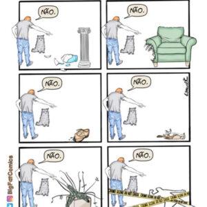 Coisas terríveis que um gato é capaz de fazer