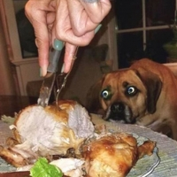 Cães e seus olhares de desejo.