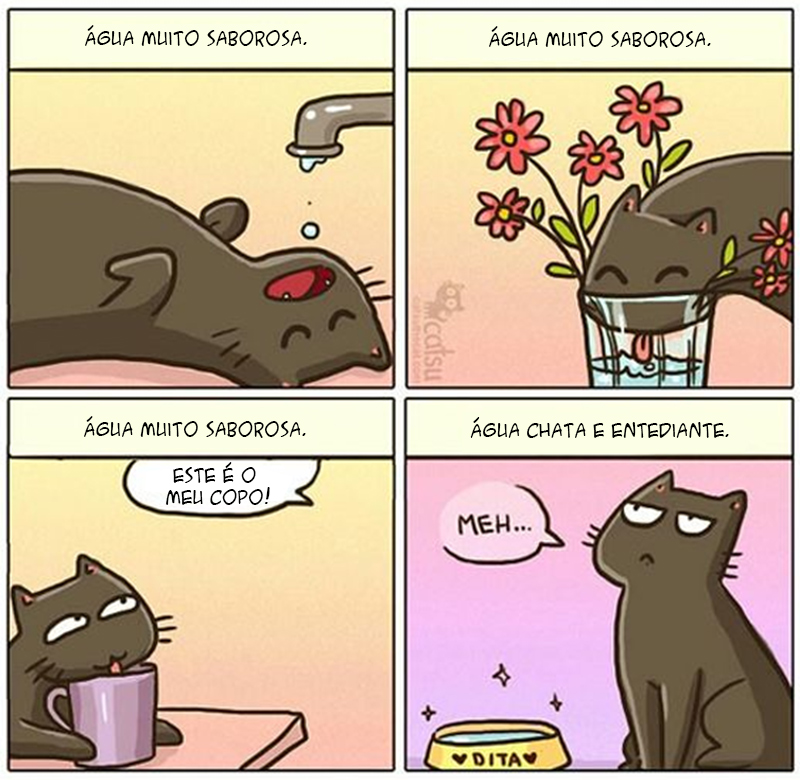 água para gatos