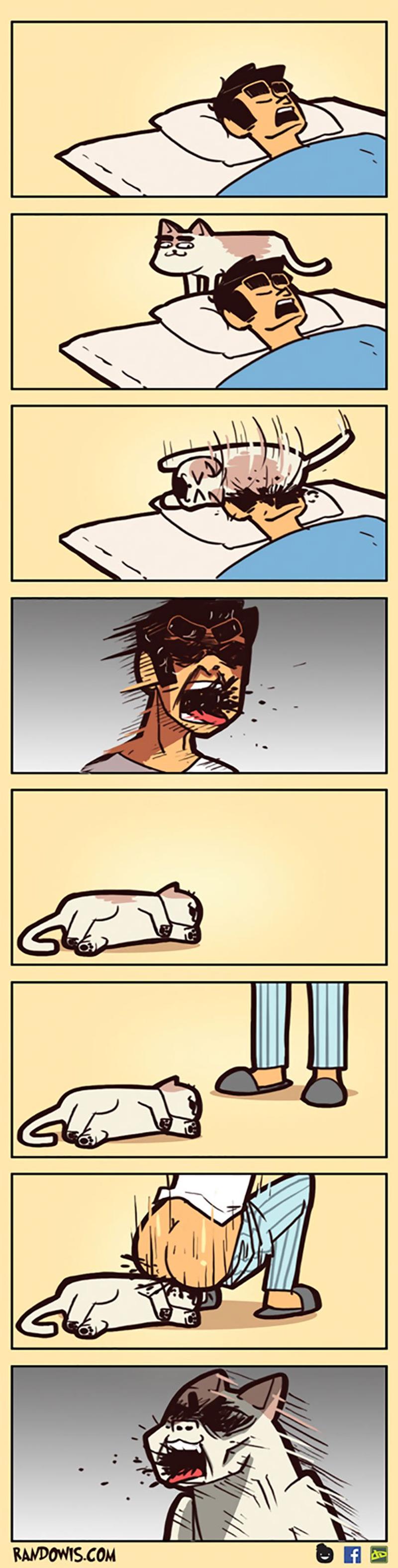 Dando o troco no gato