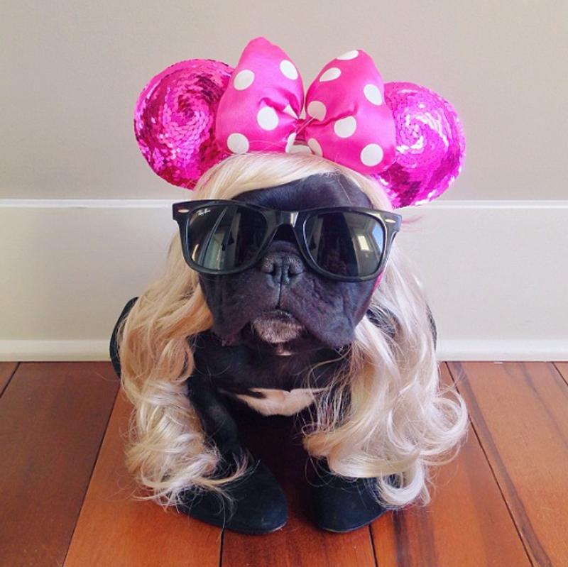 Conheça a bulldog que faz o maior sucesso na internet
