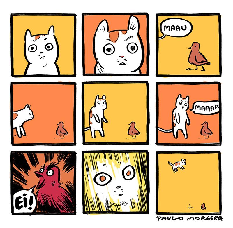 Nunca assuste um gato