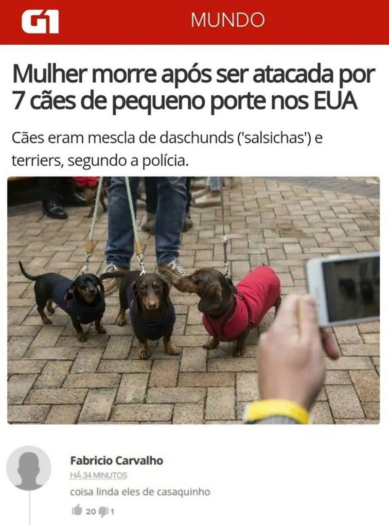 Cães de pequeno porte podem ser muito perigosos