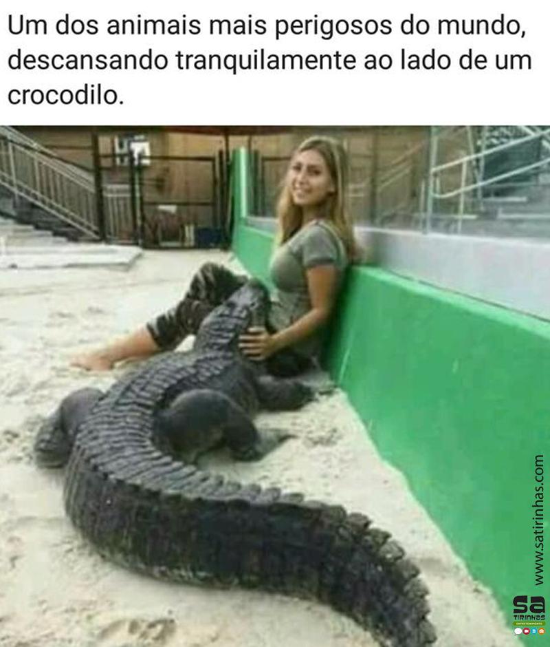 Um dos animais mais perigosos do mundo