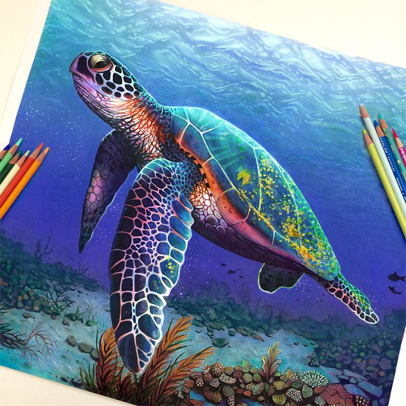 ilustrações apenas com lápis de cor