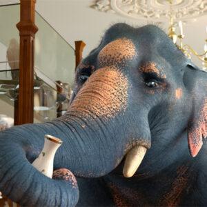 Um elefante numa loja de porcelanas causaria muito estrago
