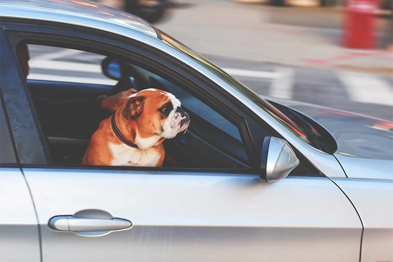 Motorista estressado